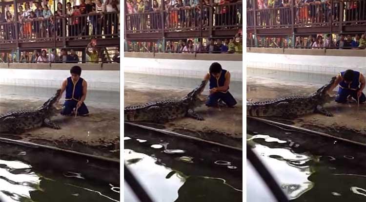 Acidente assustador num espetáculo com crocodilos na Tailândia! Vídeo impressionante!