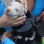 Este cãozinho ficou preso num tubo, destinado à morte… Mas o que lhe fizeram supera tudo o que já viste!