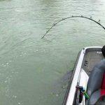 Este pescador apanhou um peixe bem maior do que esperava! Mas que monstro!