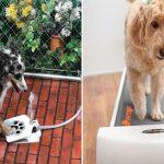15 Produtos de génio para os donos de animais de estimação!