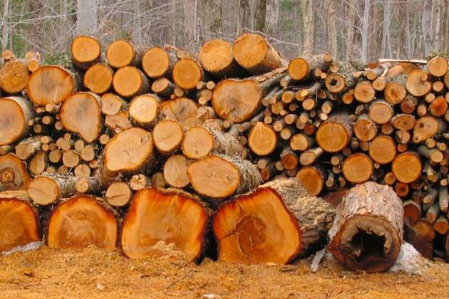 Ele juntou troncos durante anos… Quando vires o que fez com eles… UAU!
