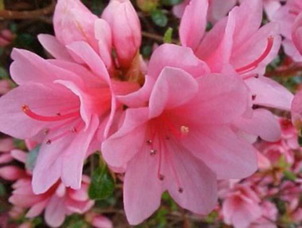 flores_assassinas_tens_casa_3