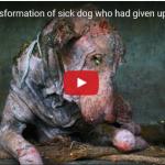 Vejam o que aconteceu com este cão encontrado doente na berma de uma estrada!