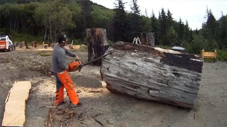 Ele ligou a motosserra e começou a cortar… o que aconteceu com o tronco… UAU! INACREDITÁVEL!