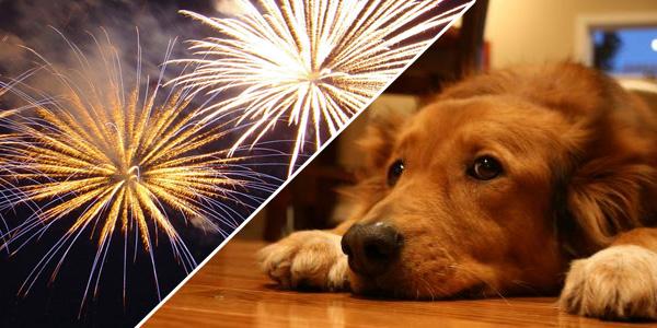 Truque genial para que o teu cão não se assuste mais com o fogo de artifício! Fantástico!