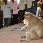 O que este macaco fez com este cão deixa qualquer pessoa de queixo caído!!