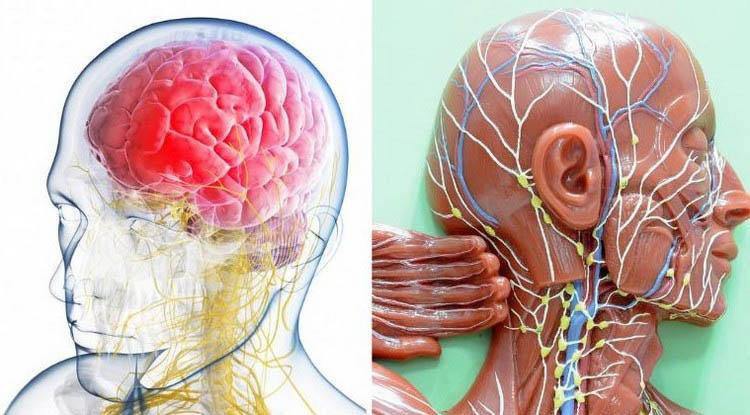 O teu cérebro pode estar cheio de fluídos tóxicos! Dorme desta forma para drenar isso!