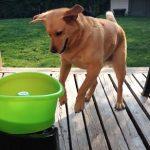 Este cão foi resgatado da rua! Quando vires como está agora…. É impressionante!