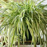 Limpa o ar de tua casa com estas 8 fantásticas plantas!