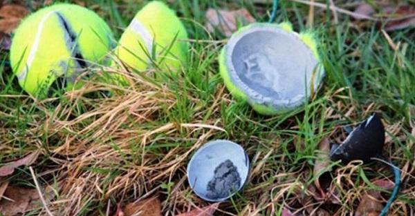 Se vires uma bola de ténis abandonada no chão não lhe toques! A razão é simplesmente aterrorizante!