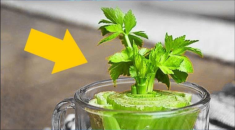 8 verduras e legumes que podes cultivar em casa e de forma for Cultivar vegetales en casa