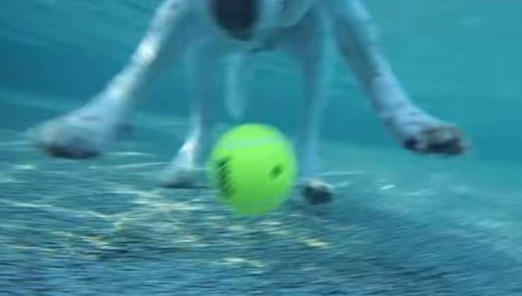Ele atira bolas de ténis para a piscina e as deixa lá durante a noite… No dia seguinte, fica maravilhado com o resultado!