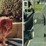 Cão ficou ao lado do túmulo do dono durante 9 anos… Até que um dia, eles perceberam algo de errado…