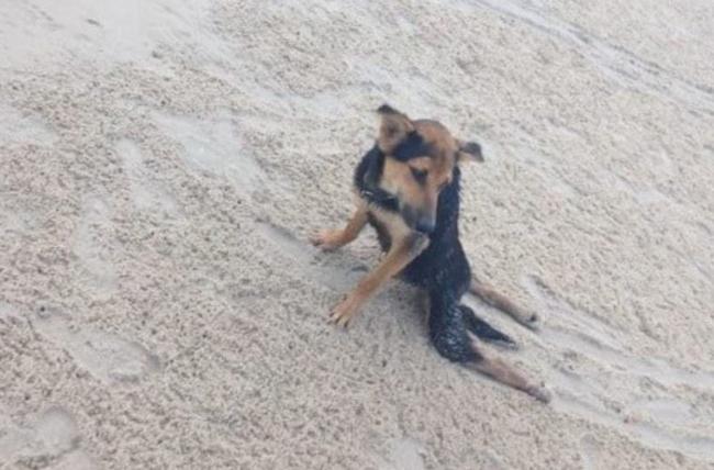 Todos se recusaram a ajudar este cão paralisado… Até que o inesperado aconteceu… E tudo mudou!