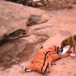 Esta mulher teve uma hemorragia no meio do deserto… Mas um cão salvou-a da forma mais inimaginável!