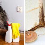 Aprende a eliminar o bolor/mofo de forma natural e duradoura com apenas um produto!