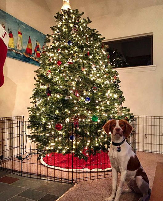 15_genios_que_conseguiram_proteger_a_arvore_de_natal_dos_predadores_naturais_12 - How to Protect Your Christmas Tree from Pets - Lifestyle, Culture and Arts