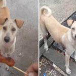 Cão implora por comida na rua mas não come… O motivo está a fazer o mundo inteiro chorar!