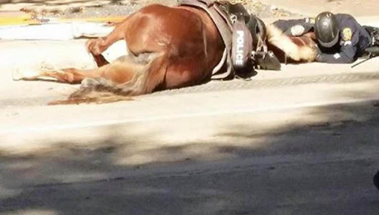 Esta égua foi atropelada e estava a morrer na rua… O que o polícia fez a seguir está a correr o mundo inteiro!
