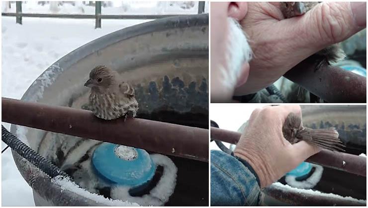 Este homem salvou um pássaro preso a um poste congelado com a sua própria respiração!