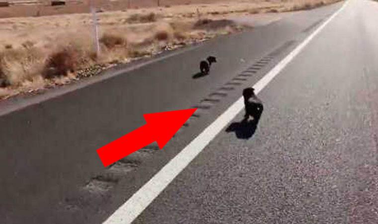 2 Sombras escuras apareceram na estrada no meio do deserto… Quando o motorista fez algo inimaginável!