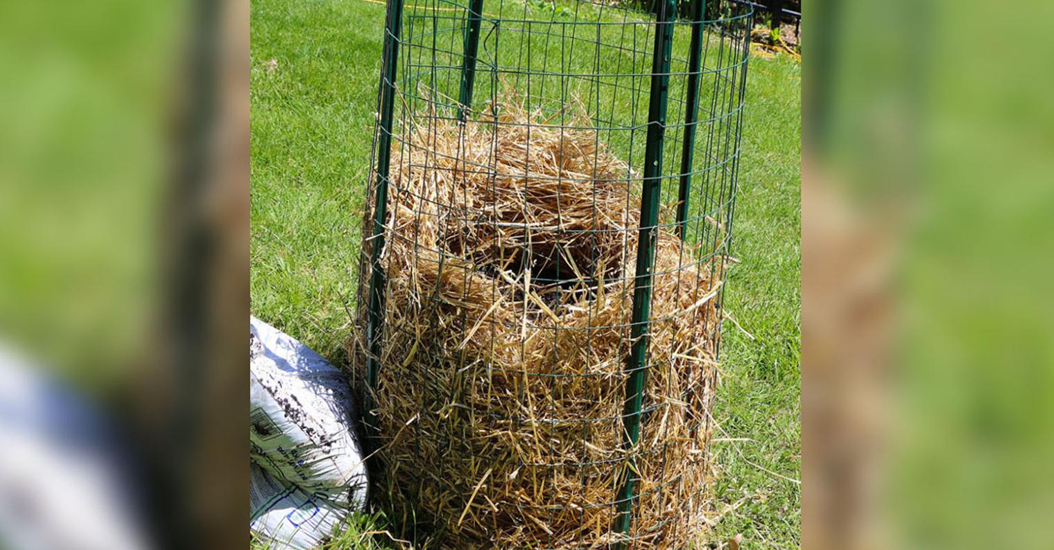 Não gastes mais dinheiro a comprar batatas! Vê como plantar uma quantidade infinita de batatas em casa!