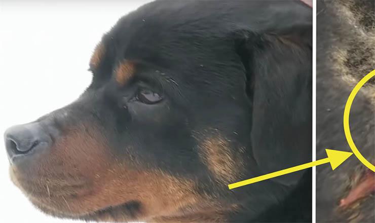 Quando este cão mordeu a dona enquanto dormia, ela ficou chocada! Mas quando percebeu o que estava a acontecer… Inacreditável!