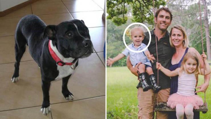Este cão arrastou o pai para a água… Ele ficou em choque quando viu o que estava a acontecer!