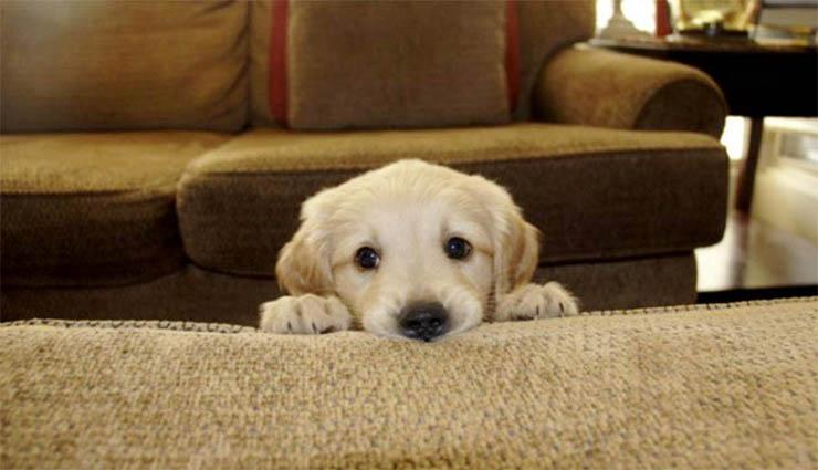 Poderás sofrer um ataque de… ternura! Com estes 21 animais tão tímidos e adoráveis!