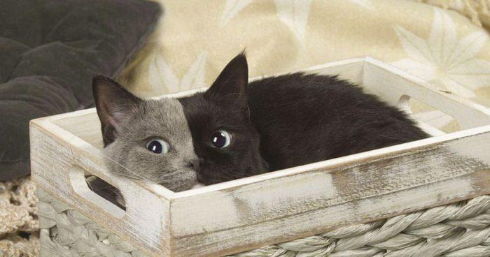 """Gato raro nascido com """"duas caras"""" cresce e transforma-se no gato mais lindo"""