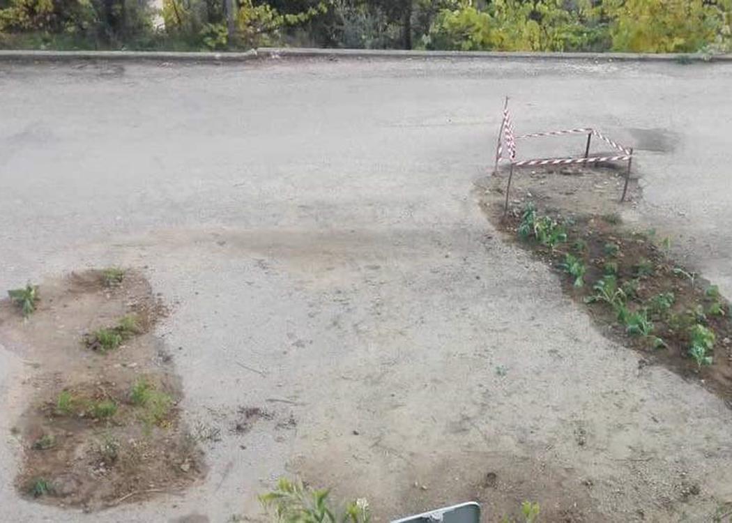 Protesto original – plantaram couves nos buracos da estrada