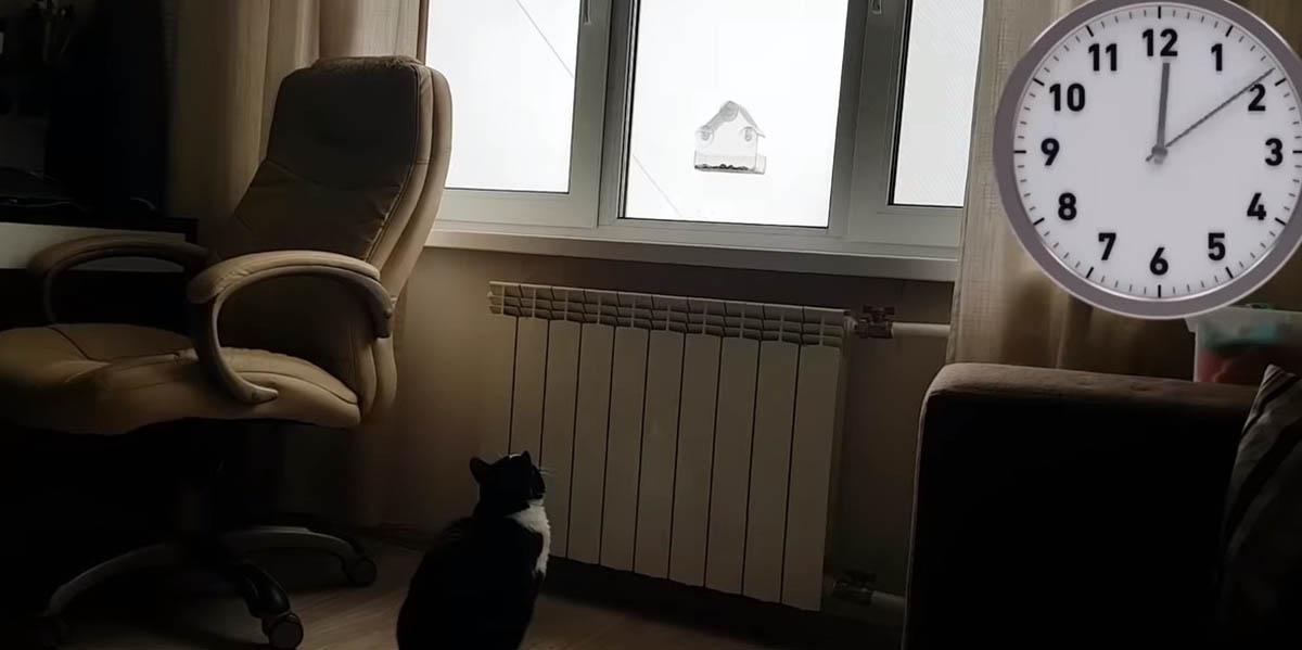Truque para entreteres o gato várias horas quando não estás em casa