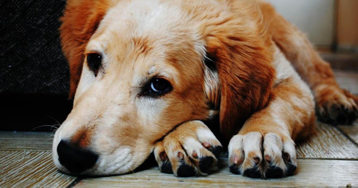 Um cão é o melhor presente que podes dar a tua família e a ti!