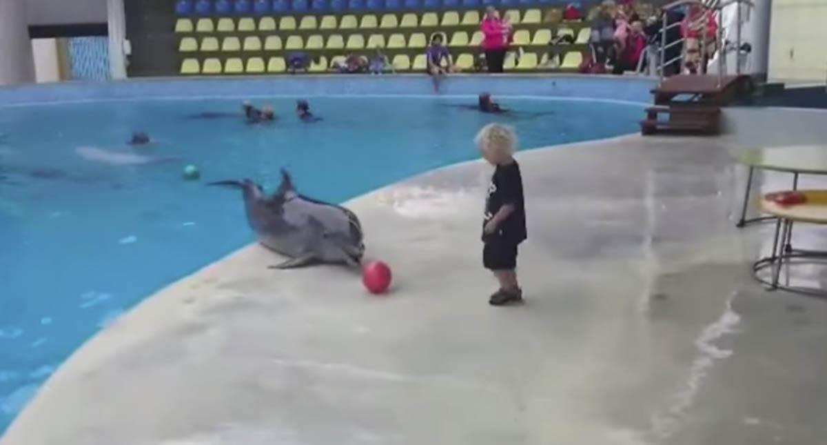 Momento ternurento de golfinho e criança a brincarem pela 1ª vez