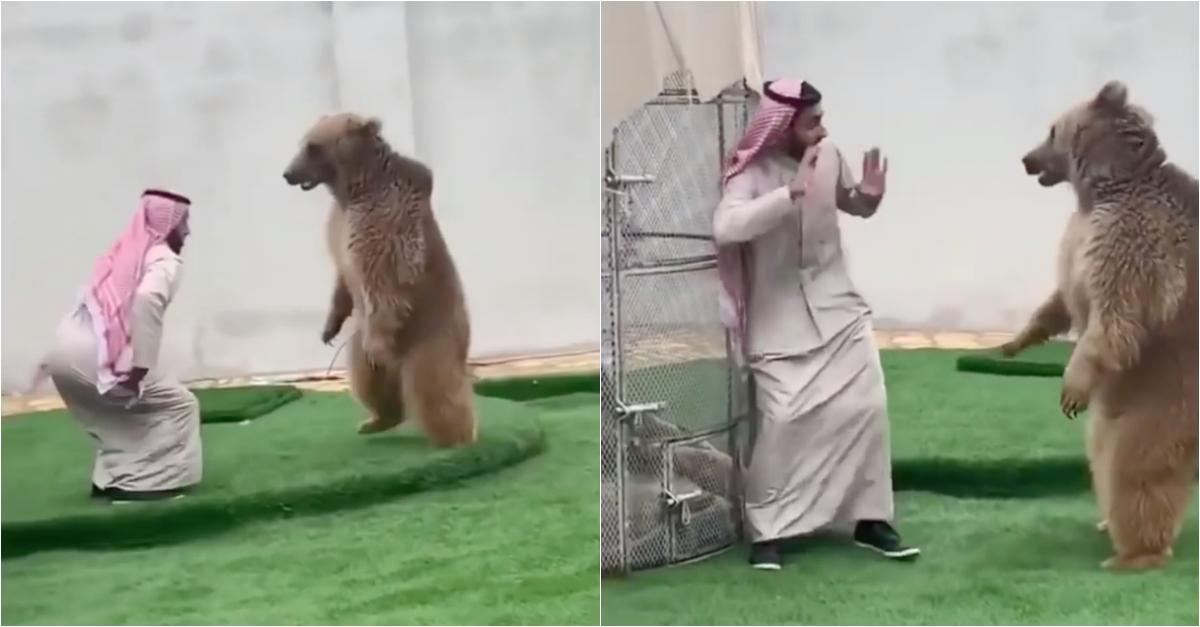 Jovem brinca em casa com urso como se fosse um cão