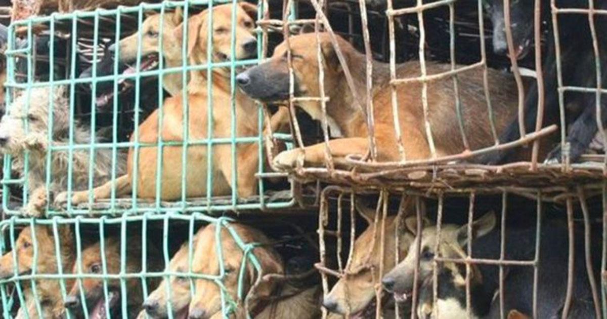 Shenzhen é a primeira cidade chinesa a proibir o consumo de cães e gatos