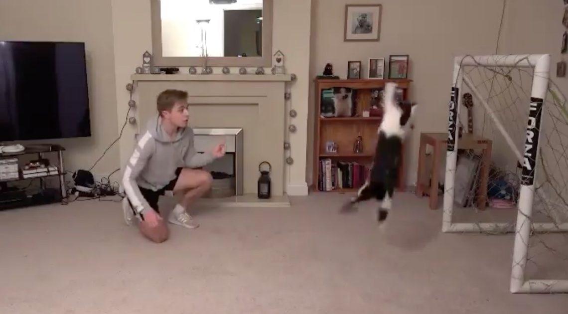 Vídeo de gato guarda-redes torna-se viral nas redes sociais