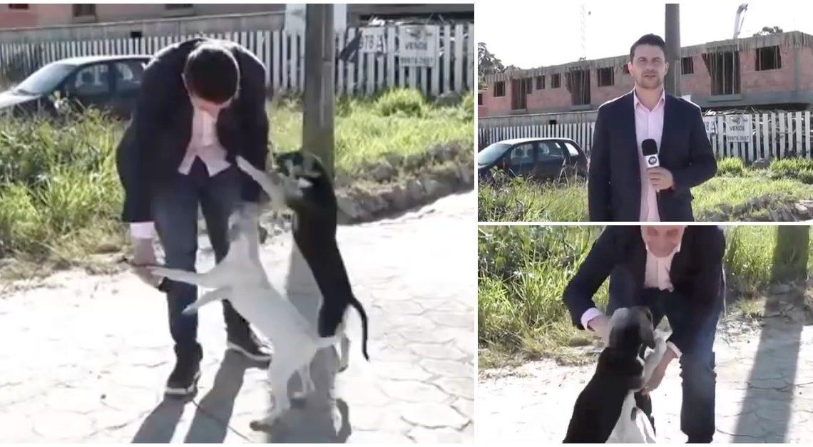 Repórter teve de interromper reportagem para brincar com cães de rua