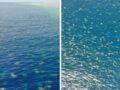 Imagens impressionantes de milhares de tartarugas na Grande Barreira De Coral